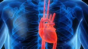 Bolile cardiovasculare