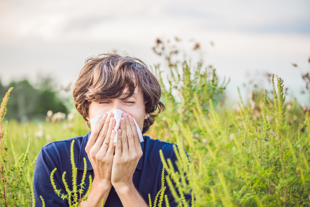 Aparatul de aerosoli si beneficiile lui in alergia la ambrozie